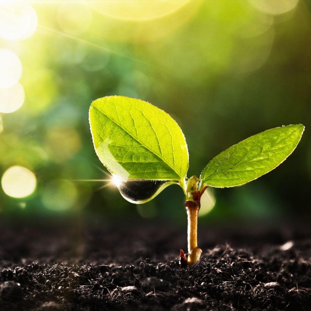 What nutrients do plants lack?